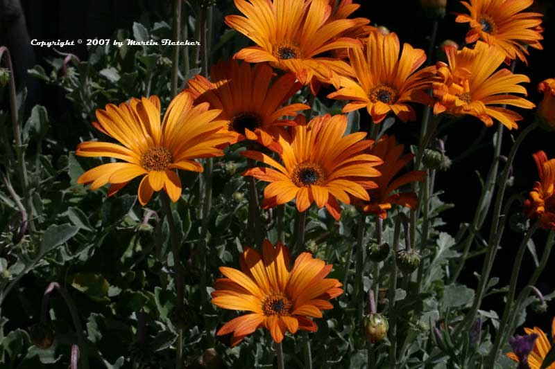 Alphabetical listing of plants that begin with A